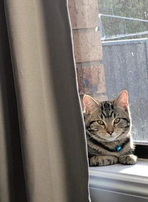 cat laying down sunning itself